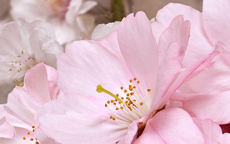 Декор Belleza Букет розовый 25x40 цена