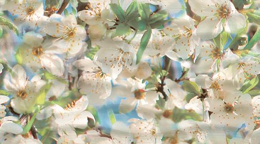 Dec Spring Panno A КПН16SpringA 25х45 недорго, оригинальная цена