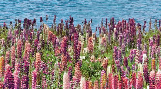 Dec Flora Декор КВС16Flora 25х45 candles 4 декор 25х45