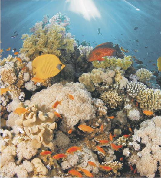 Dec Corals Panno (панно из 2-х шт) 50х45 цена 2017