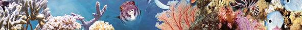 Ocean Reef 1 Бордюр 5x50 бордюр ceradim pattern abstraction nene 2x50