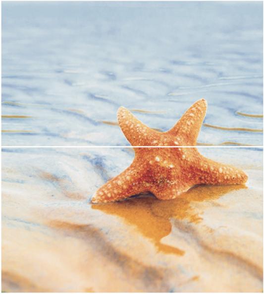Dec Starfish 1 Panno (панно из 2-х шт) КПН16Starfish1 50х45 starfish