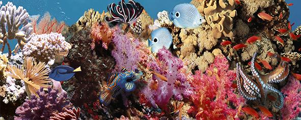 Ocean Reef 1 Декор 20x50 декор cersanit romantic towns inserto b 20x50