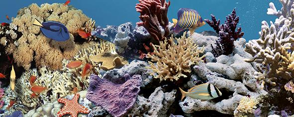 Ocean Reef 2 Декор 20x50 декор cersanit romantic towns inserto b 20x50