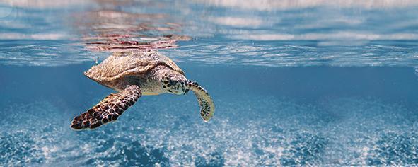 Ocean Turtle Декор 20x50 декор cersanit romantic towns inserto b 20x50