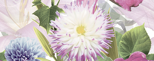 Dec Amoria Panno A 20х50 dec pixie panno c 20х50