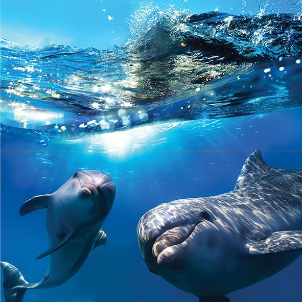 Dolphins Панно 50x50 цены