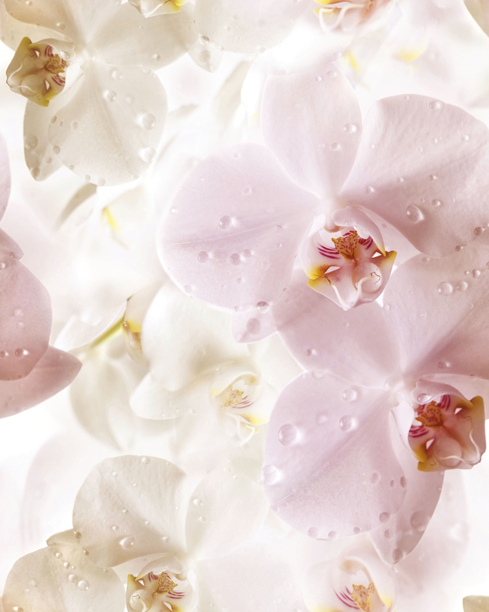 Porto Flowers Flower Панно 75x60 (3пл) jigu 45n1096 45n1098 45n1720 45n1097 45n1099 45n1721 original laptop battery for lenovo tablet 2 3679 25g 3679 27 x220t