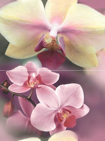 Blossom Панно P2D183 40х30 (из 2-х пл.) цена