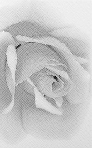Камелия черн 02 Декор 25x40 настенная плитка шахтинская плитка картье серый 02 25x40